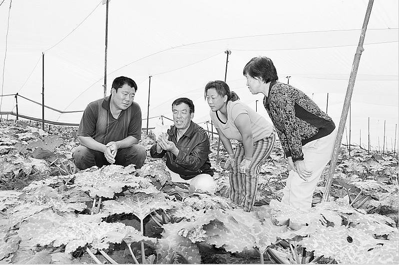 李生贵/(图为农民土专家李生贵正在为大棚种植户传授西葫芦种植技术)